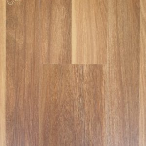 spotted gum 502